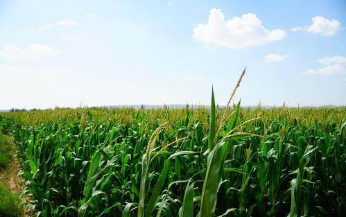 铁岭优良的农产品网