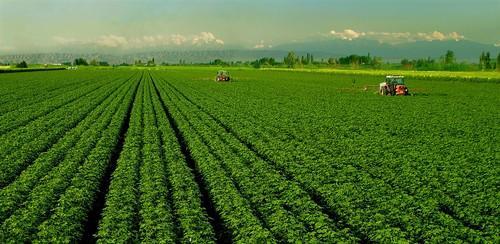 合肥大型的农业