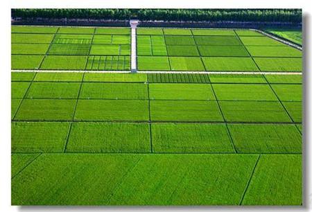大兴安岭技术好的农业