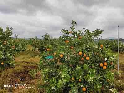 乌兰察布省心的农产品信息网在线