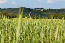 邯郸靠谱的生态农业信息招商