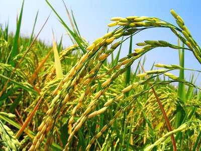 秦皇岛好的绿色食品网站