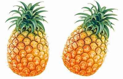 沧州哪里有新鲜水果招商
