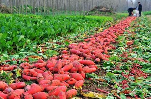 晋城各地农产品平台