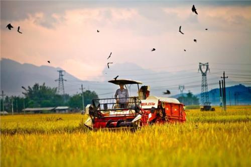 揭阳大型的农业