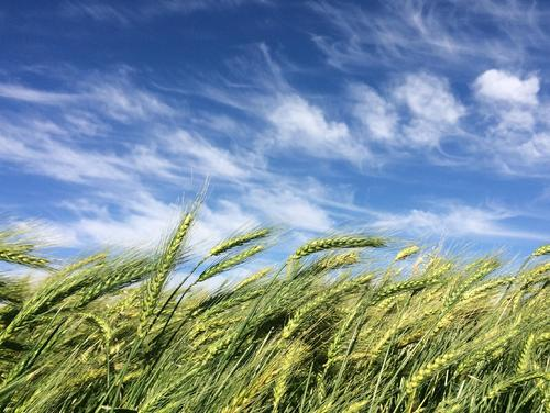 阿坝技术好的农业