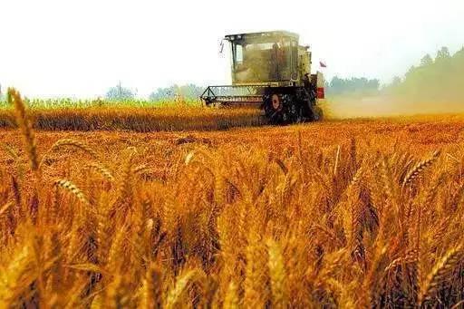 马鞍山技术好的农业选哪家