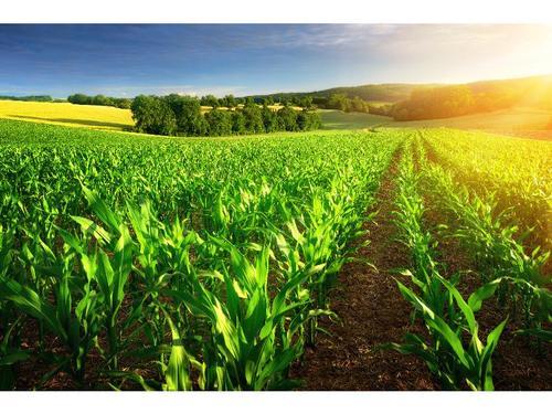 福建大型的农业选哪家