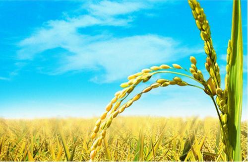 深圳技术好的农业怎么样