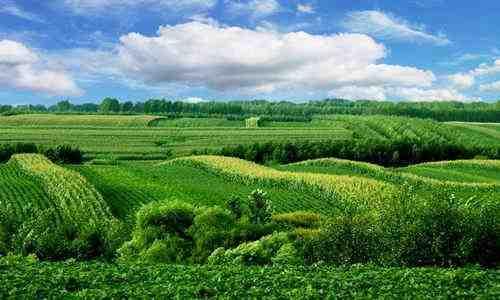 廊坊优质的绿色农业网