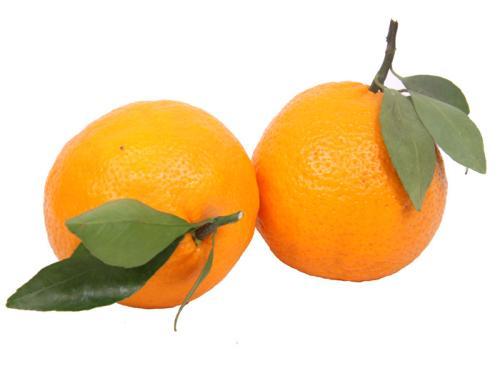衡水好吃的热带水果加盟