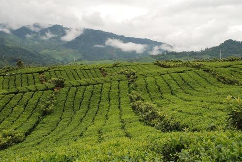 赤峰放心的生态农业推荐