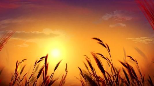 大同靠谱的生态农业加盟