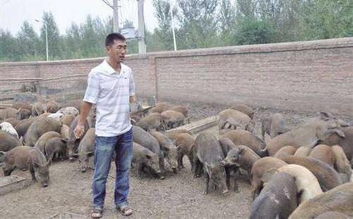 北京大型的畜牧养殖怎么样